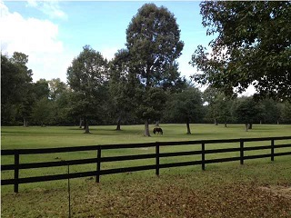 horse property for sale in charleston sc